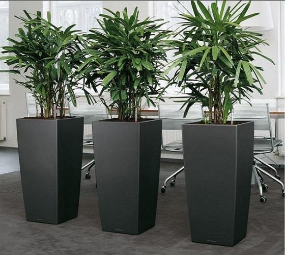 lechuza cubico. Black Bedroom Furniture Sets. Home Design Ideas